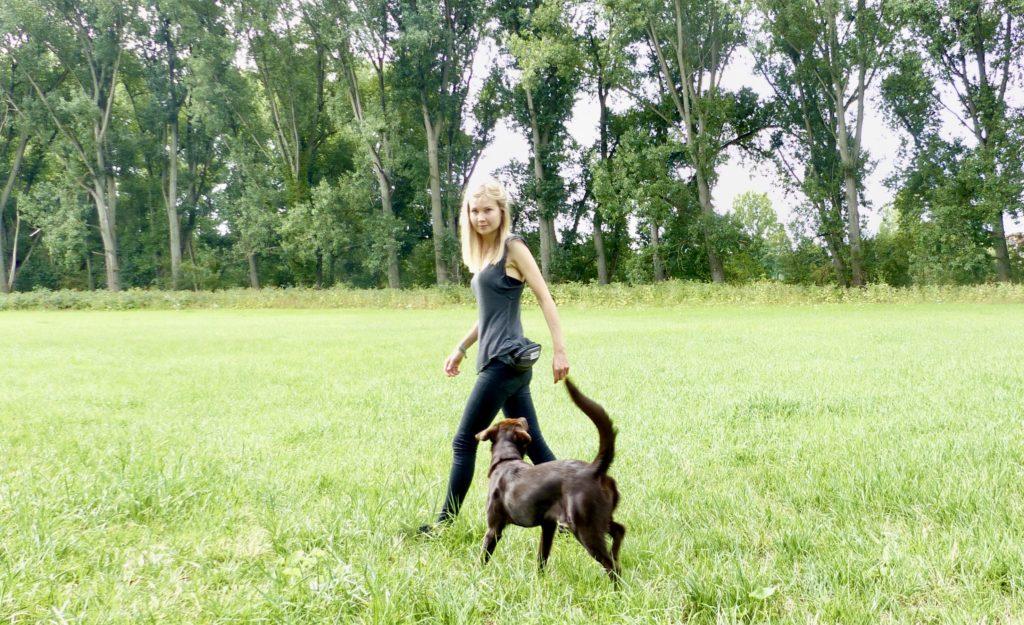 Berufe mit Hund