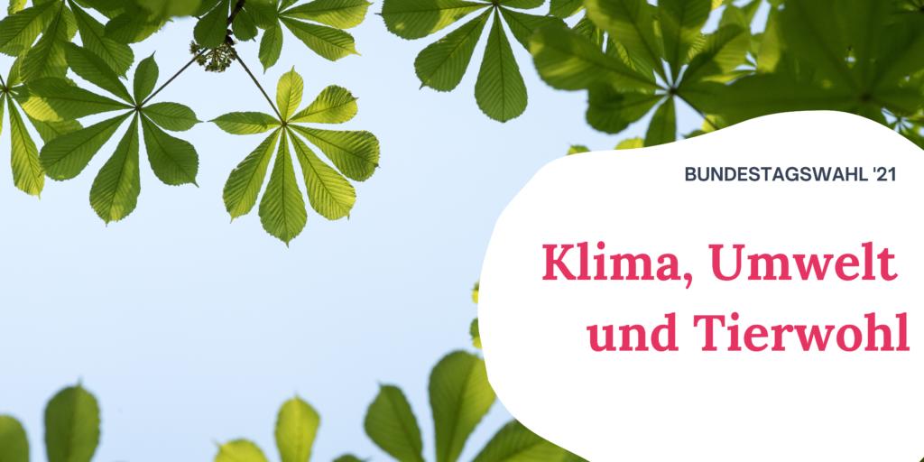"""Auf dem Bild sieht man die Blätter eines Baumes vor dem blauen Himmel. Rechts auf dem Bild steht """"Bundestagswahl '21 Klima, Umwelt und Tierwohl"""""""